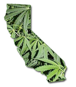 Marijuana In California