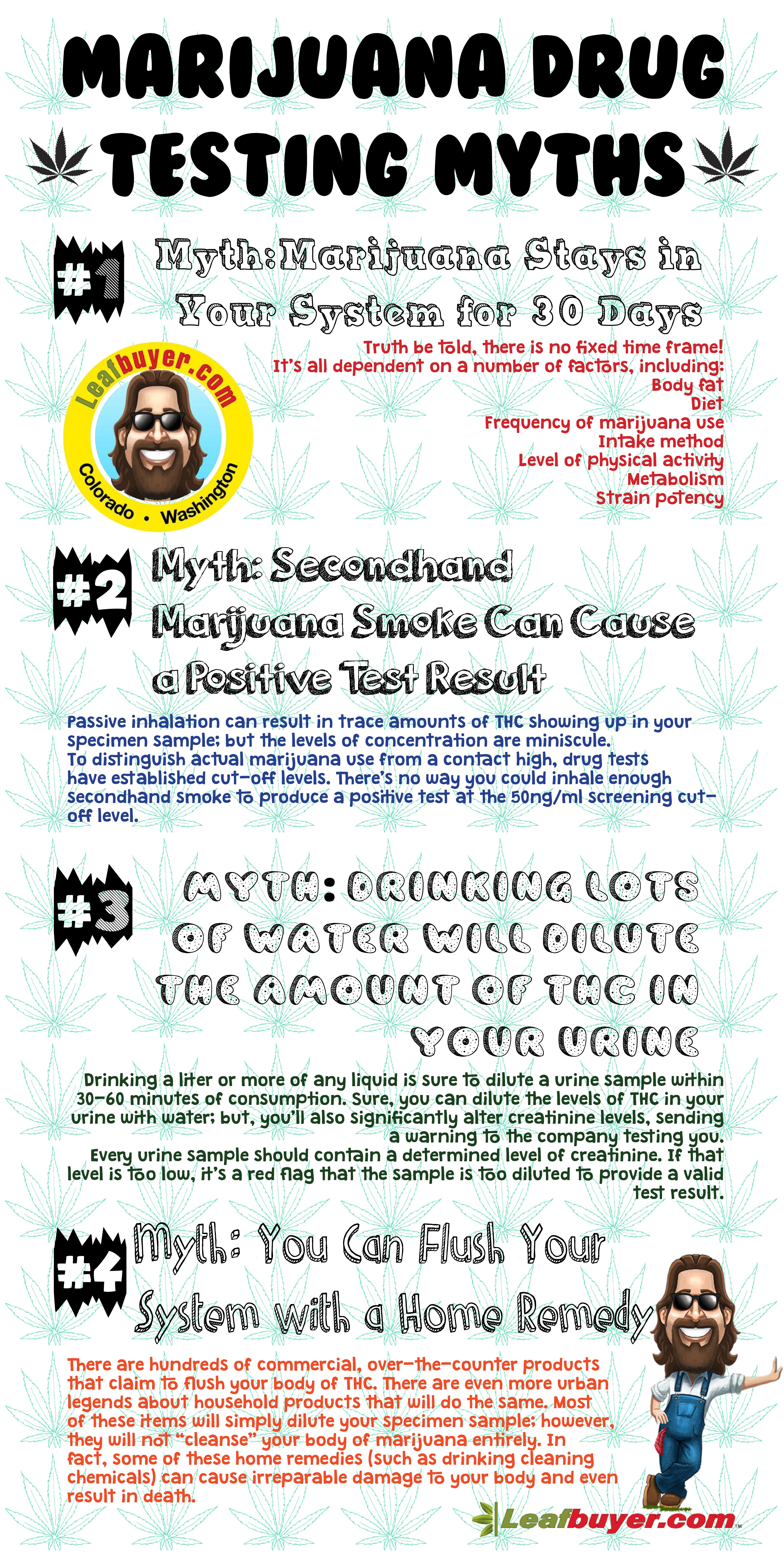 infographic marijuana drug testing myths leafbuyer marijuana drug testing myths infographic