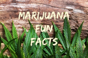 The Best Marijuana Fun Facts