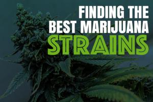 Finding the Best Marijuana Strains