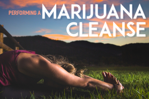 Performing a Marijuana Cleanse