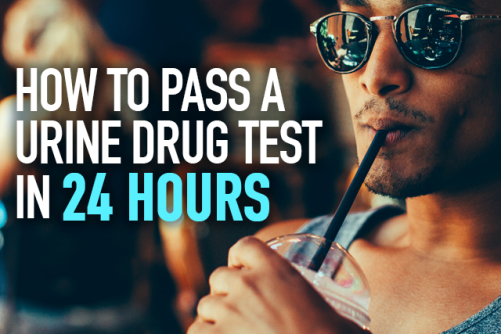 How to Pass a Drug Test in 24 Hours