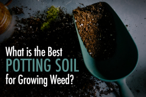 Best Potting Soil For Growing Weed