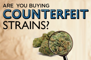 Counterfeit Strains