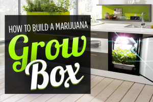 Build a Marijuana Grow Box