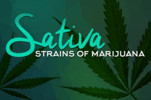 Sativa Strains of Marijuana