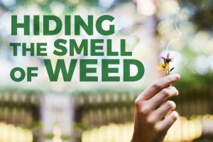 How To Get Rid Of Weed Smell