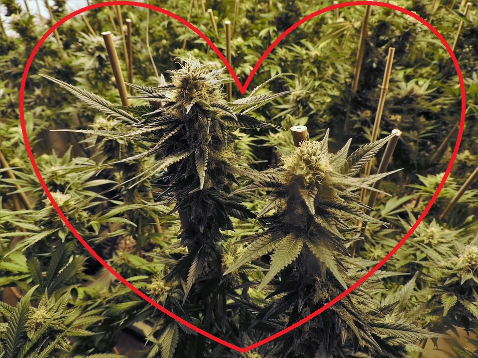 Best Valentines Day Weed Gifts