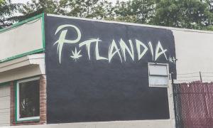 most popular strains in portland