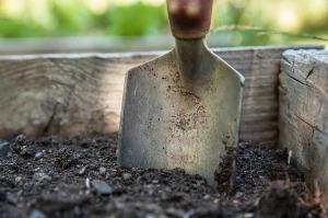 summer gardening cannabis strains