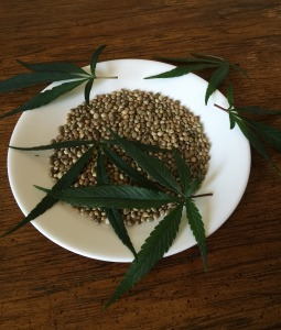 cannabis seeds and leaves on plate