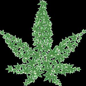 pot leaves in a pot leaf