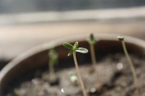 seedling-1062906_1920