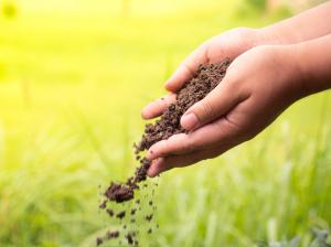 Marijuana Soil Nutrients