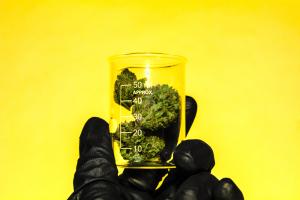 Marijuana Worker's License