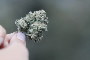 Nevada Woman Holding Marijuana Bud