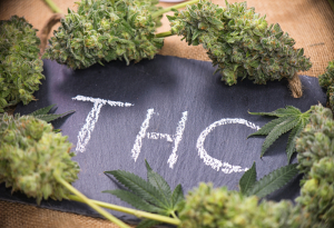 What Is THC Tetrahydrocannabidol