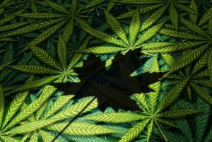 Marijuana Canadian Flag Leaves