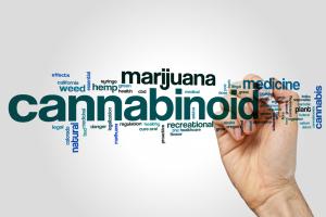 Marijuana Vocabulary Test