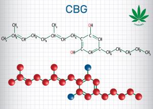 CBG Molecule