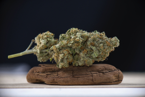 Marijuana Nug on Driftwood